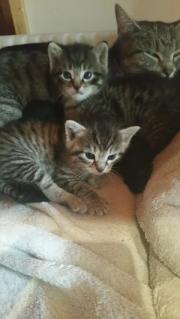 Katzenbabies am 31.