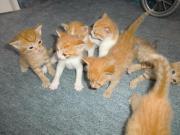 Katzenbabys abzugeben absofort