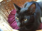 Katzenkind Apollo zu