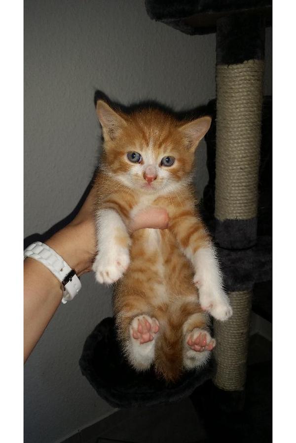 kittenauffangstation  katzenbabys suchen ein schönes