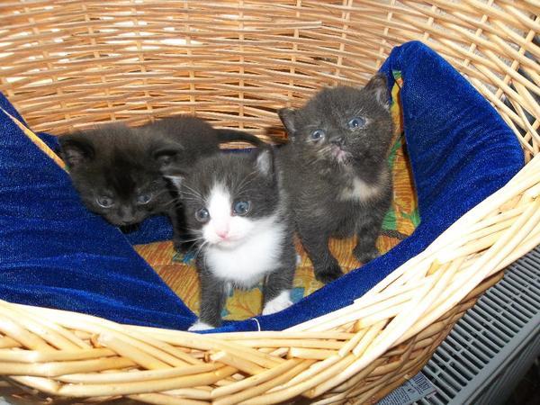 Tiermarkt Katzen Zu Verschenken