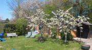 Kleingarten in Calw