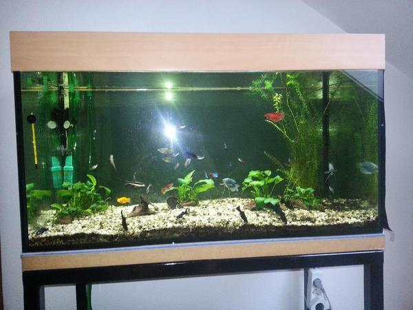 aquarium selbstabholer neu und gebraucht kaufen bei. Black Bedroom Furniture Sets. Home Design Ideas