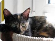 Leukose - Katze Arielle