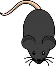 Mäuse / Frostmäuse