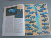 Malawisee + Tanganjikasee Bücher