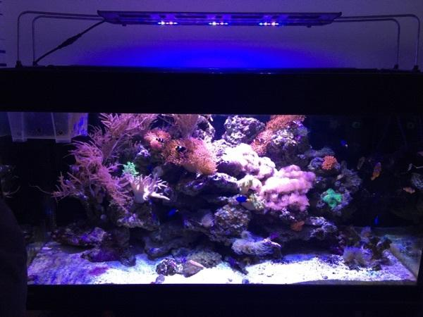 meerwasser aquarium komplett led 500l meerwasseraquarium in friedrichsdorf fische aquaristik. Black Bedroom Furniture Sets. Home Design Ideas