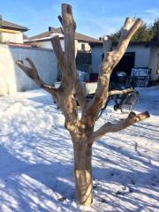 Naturholzkratzbaum, Baum, Baumstamm