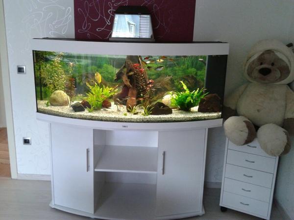 Schön Kleinanzeigen Aquarium Fische: Aquarium s??wasser schwerttr?ger  UL94