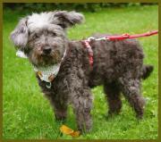 Patenhund: Nicola, 14