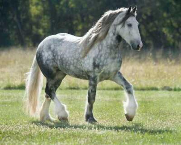 pferd kaufen in overath pferde kaufen und verkaufen ber. Black Bedroom Furniture Sets. Home Design Ideas