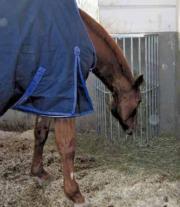 Pferde Grossraum- Heuraufe