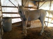 Pferde in Not ...