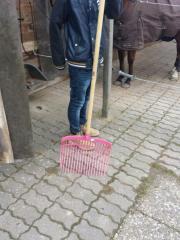 Pferdemist kostenlos abzugeben!!!