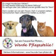 Pflegestellen für Hunde