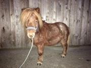 Pony Wallach Pumuckl