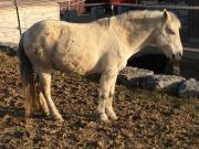 Pony Wallach zu