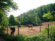 Reiterhof, Bauernhof, Reitanlage,