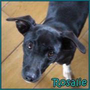 Rosalie, kleine Prinzessin