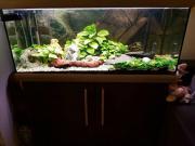 schönes Aquarium