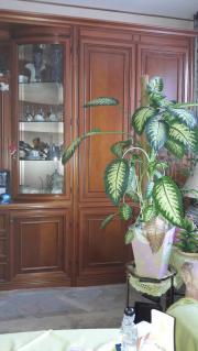 Schrankwand italienisches Kirschbaum
