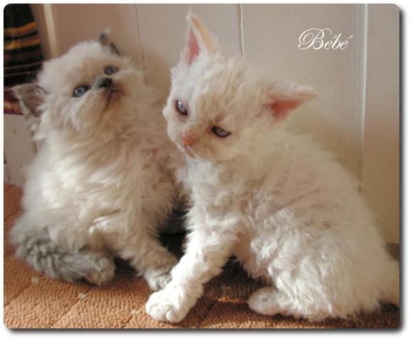 Allergiker Katzen Kaufen