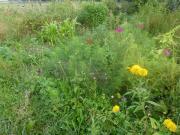 Suche Gartenfläche