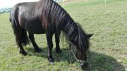 suche pony dringend .