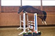 Talentierte Pferde zur
