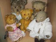 Teddybären