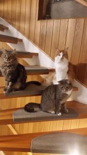 Tierschutz, Katzen, Austausch,