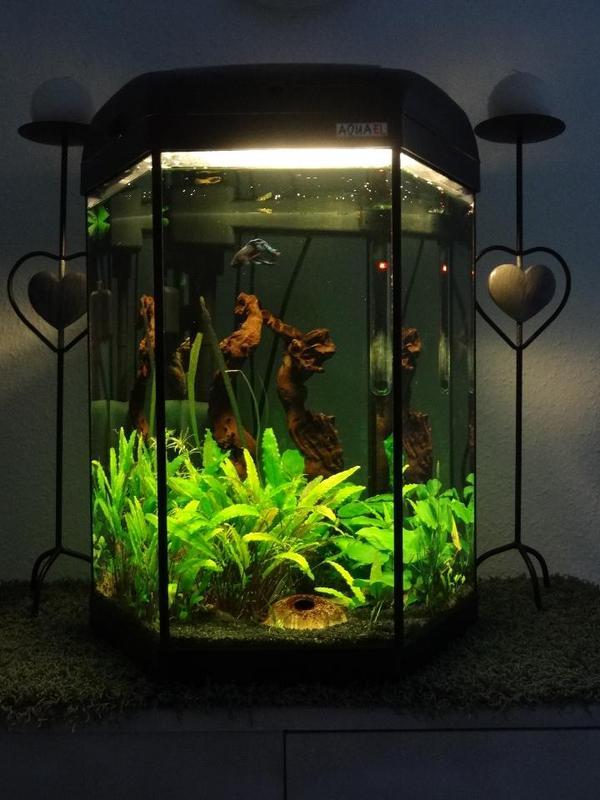 top 60l aquarium zu verkaufen in hofheim fische. Black Bedroom Furniture Sets. Home Design Ideas