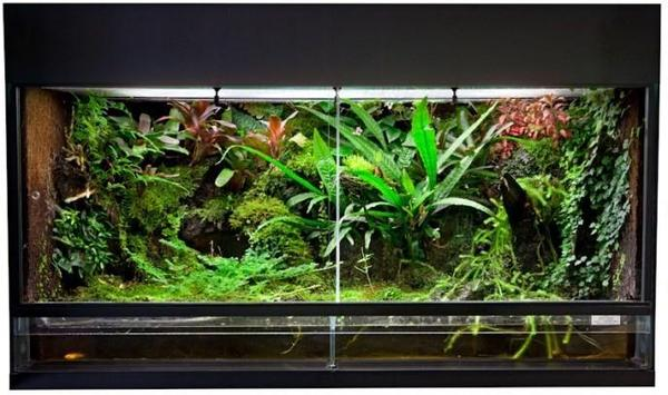 Forex platten terrarium
