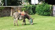 Türöffnertag im Esel -