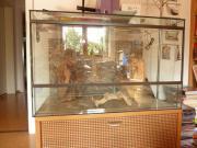 Verkaufe Glas Terrarium