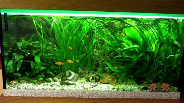 verkaufe komplett eingerichtetes aquarium 200 liter in. Black Bedroom Furniture Sets. Home Design Ideas