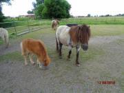 Verkaufe Mini-Pony