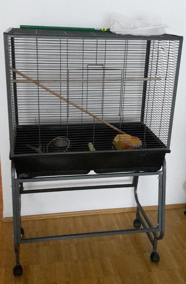 vogelk fig in karlsruhe v gel kaufen und verkaufen ber private kleinanzeigen. Black Bedroom Furniture Sets. Home Design Ideas