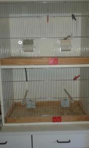 Vogelkäfig Zuchtbox