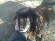 Vroni - ältere Hundedame