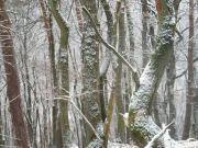 Waldgrundstück, Eichen, Buchen,