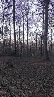 Waldstück Acker oder