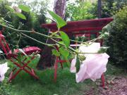 Weiblich / 48 / Gartenwohnung