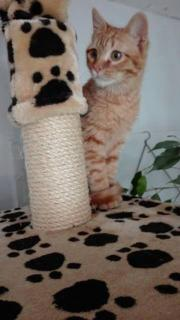 Willy, Katzenbaby sucht