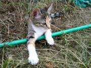 Wunderbare Katzenbabys , verschmust