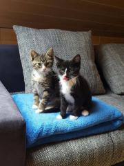 wunderschöne Katzengeschwister wegen