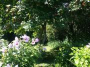 Wunderschöner Garten in