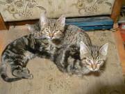 2 Katzenmuttis suchen