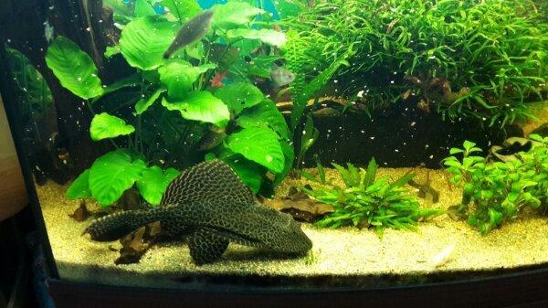 panorama aquarium kleinanzeigen aquaristik kaufen verkaufen bei deinetierwelt. Black Bedroom Furniture Sets. Home Design Ideas
