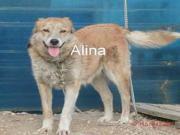 Alina - 4j,lieb,